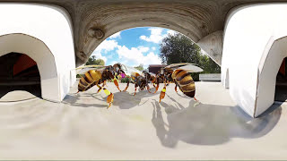 Vidéo 360° VR de l'application BZz360